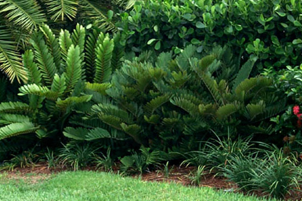Cardboard Plant - Accents | ALD Architectural Land Design Incorporated - Naples, Florida