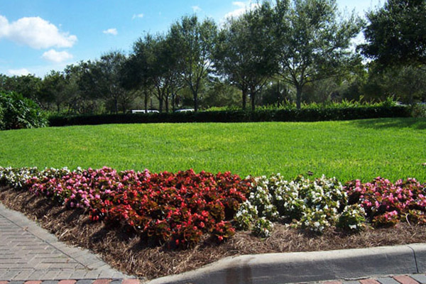 Begonia Mixed Colors - Annuals | ALD Architectural Land Design Incorporated - Naples, Florida