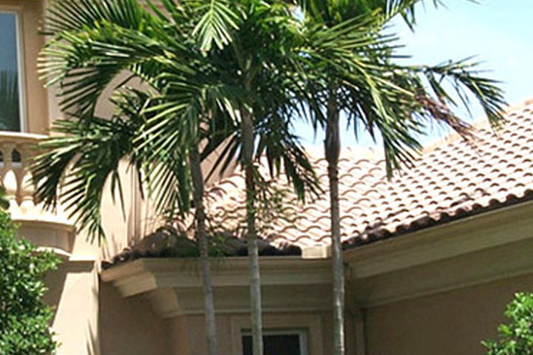 Alexander Palm - Palms | ALD Architectural Land Design Incorporated - Naples, Florida