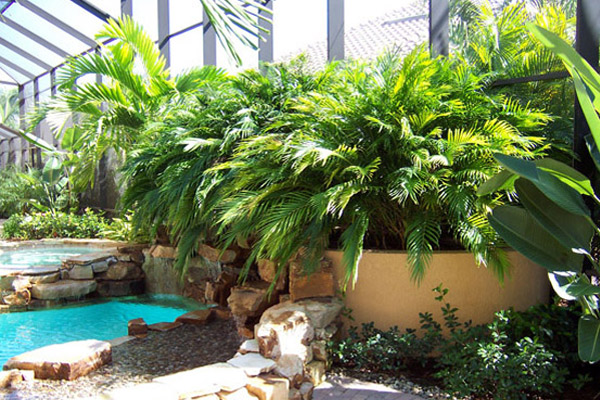 Cat Plum - Palms | ALD Architectural Land Design Incorporated - Naples, Florida