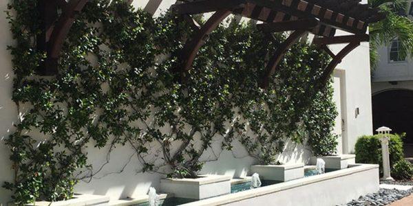 Planting   ALD Architectural Land Design Incorporated - Naples, Florida