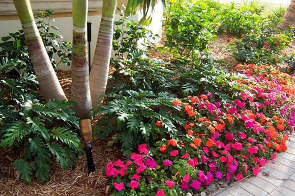 Xanadu Philodendron - Shrubs | ALD Architectural Land Design Incorporated - Naples, Florida