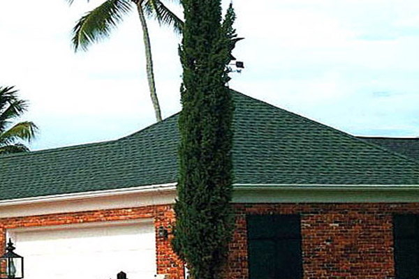 Italian Cypress - Trees | ALD Architectural Land Design Incorporated - Naples, Florida